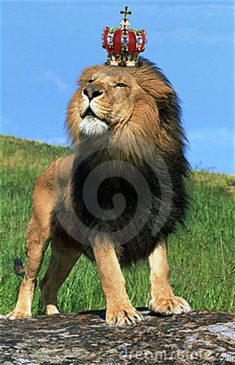 Lion Wearing Crown Royalty Free Stock Images - Image: 8064789