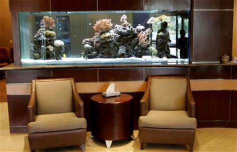 Big aquariums in homes, a costly and popular hobby | Reef