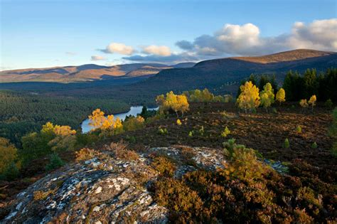 Forest & Woodland - Cairngorms National Park Authority
