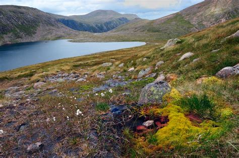 The Flora of the Cairngorms National Park | Scotland's Nature