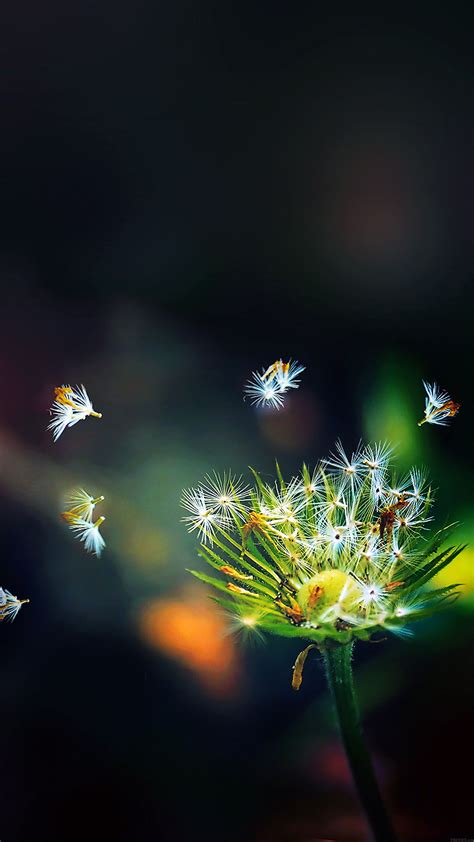 ma99-blow-dandelion-flower-nature - Papers