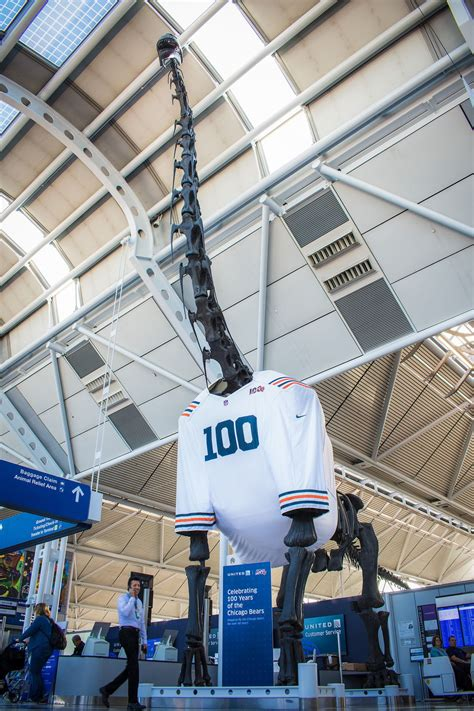 O'Hare's dinosaur decked out in a giant Bears jersey, by