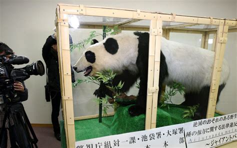 Man arrested for trying to sell stuffed giant panda in