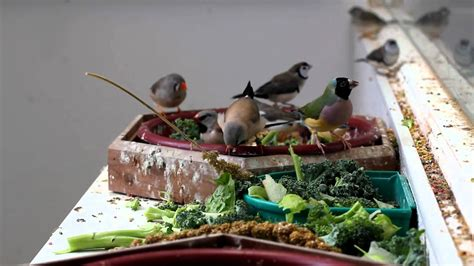 Finches Eating in Mixed Aviary - YouTube