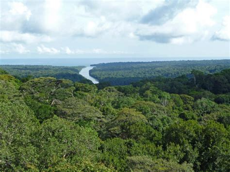 In Panama's rain forest, death means more life - THE