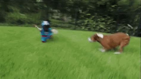 Animals Playing Football Is What You Need to See Before