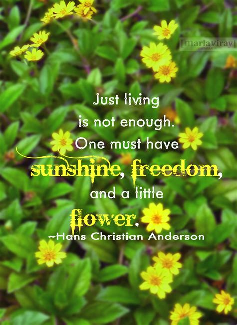 Sunshine And Flowers Quotes