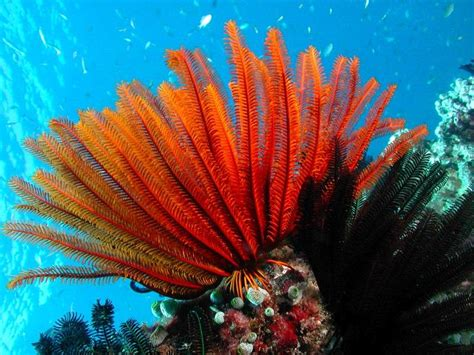 Great Barrier Reef Cruise, Great Barrier Reef Tours